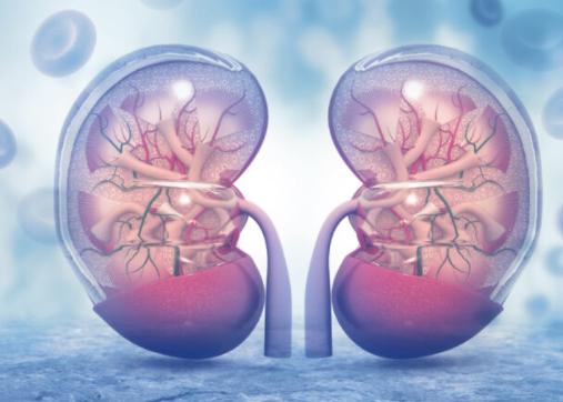 Kidney edit